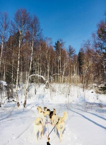 2018 02 19 - Sibérie Listvyanka (52)