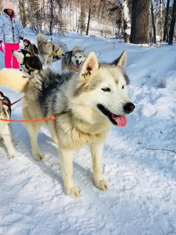 2018 02 19 - Sibérie Listvyanka (73)