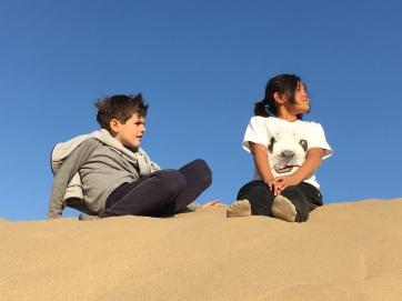 Desert - building dunes in the desert (5)