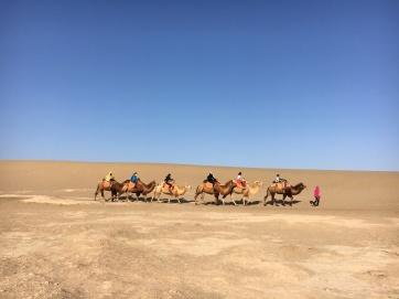 Desert - building dunes in the desert (8)